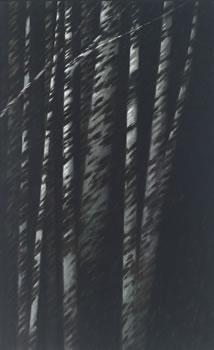 Robert Kipniss: Forest Nocturne V